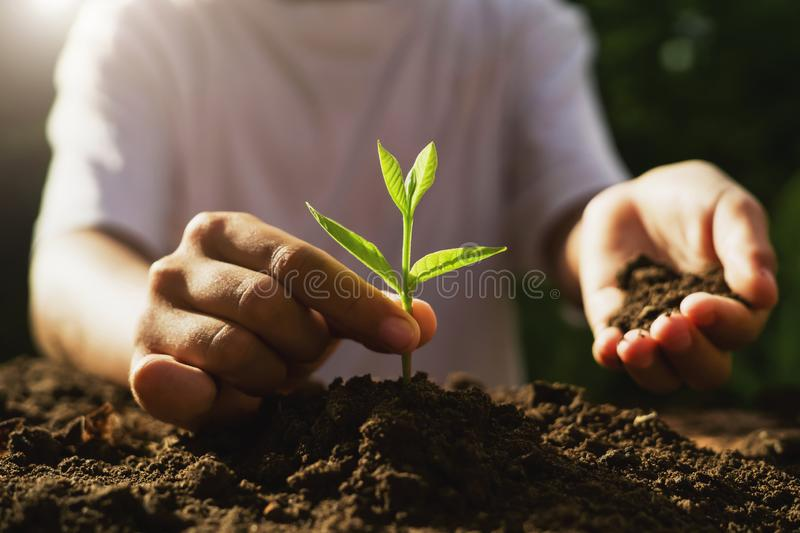 Children caring young plant on soil in garden. Sunrise, farm, holding, energy, save, world, care, helping, earth, small, kid, land, new, dirt, fertilizer stock photography