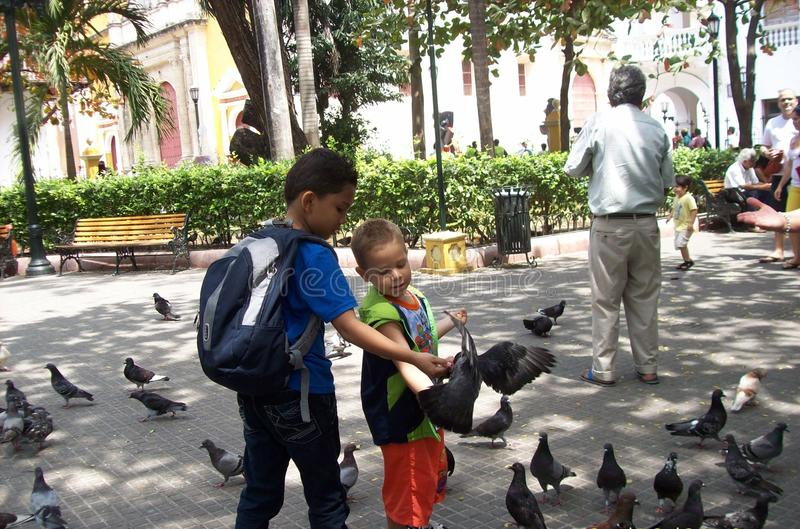 Children playing with pigeons stock photos
