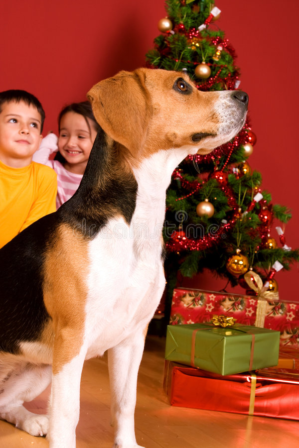 Children and dog sitting by Christmas tree stock image