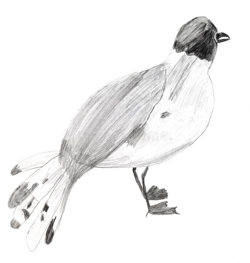 Download Children Drawing - Sterna Bird Stock Illustration - Image: 35614712