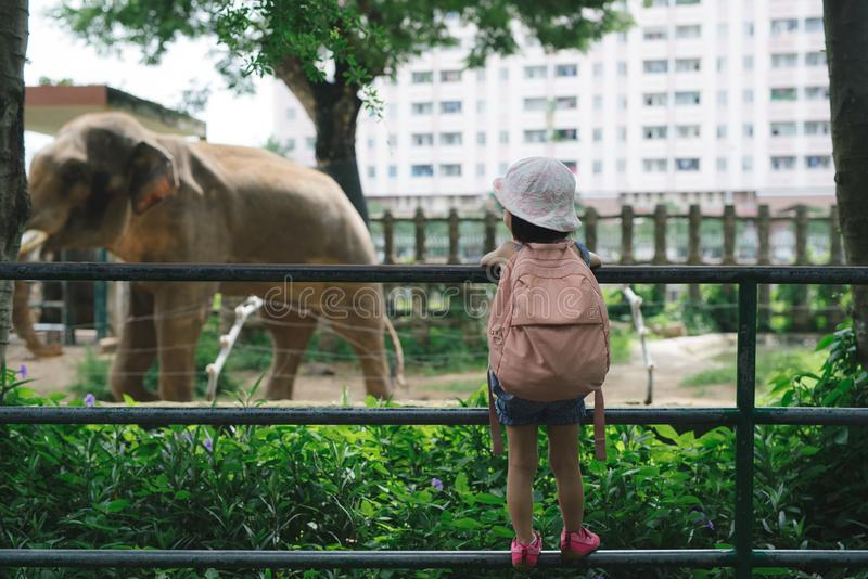 Children feed Asian elephants in tropical safari park during summer vacation. Kids watch animals royalty free stock photos