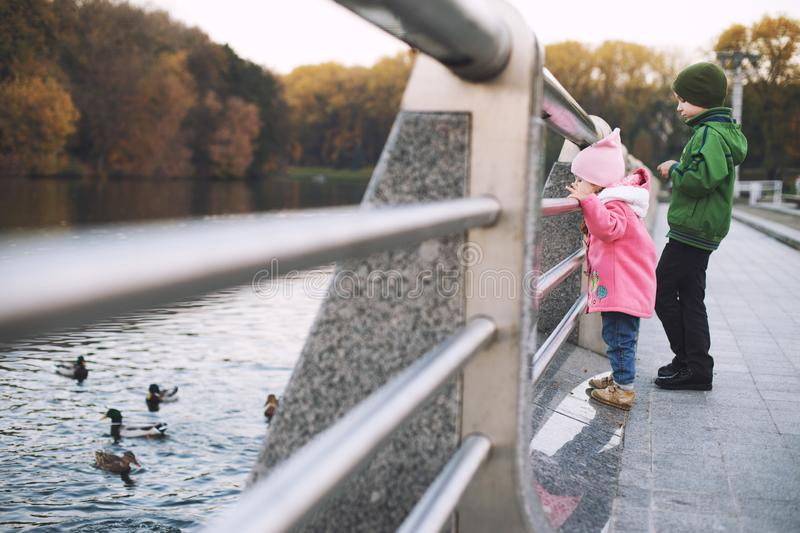 Children feed the ducks. brother and sister walk royalty free stock photography