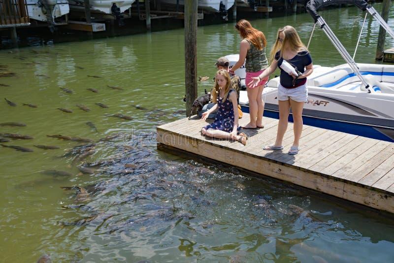 Children Feeding Carps at Smith Mountain Lake. Franklin County, VA – May 14th: Children feed the carp at Bridgewater Plaza Marina located at Smith stock images