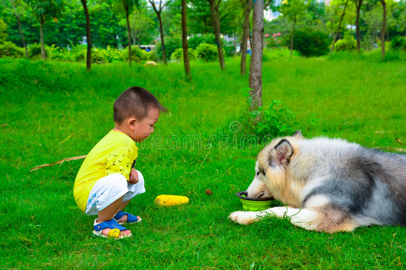 Children feeding Collie Shepherd Dog. The shepherd dog is a flexible, strong, strong, active, active dog. The dog's chest generous strength shows the strength of stock images