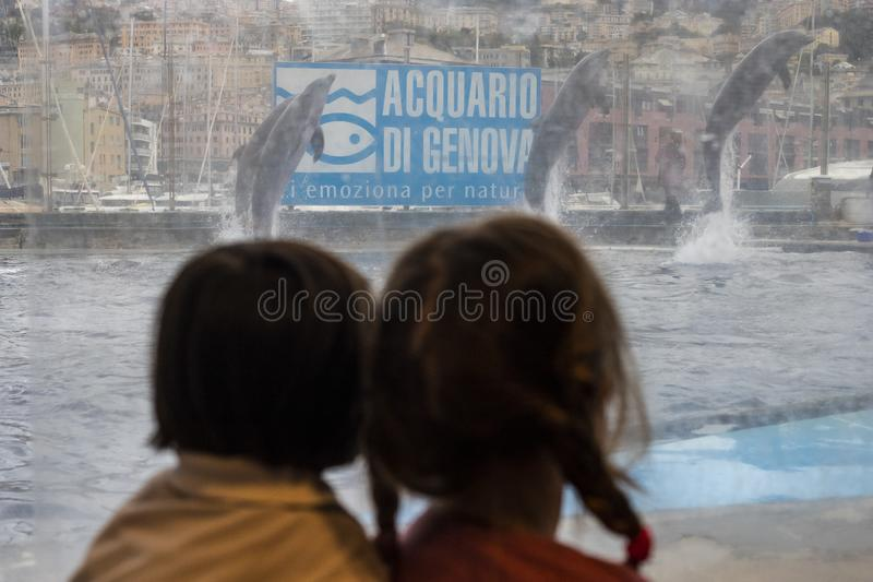 Children at Genoa aquarium, watching dolphins through glass royalty free stock photography