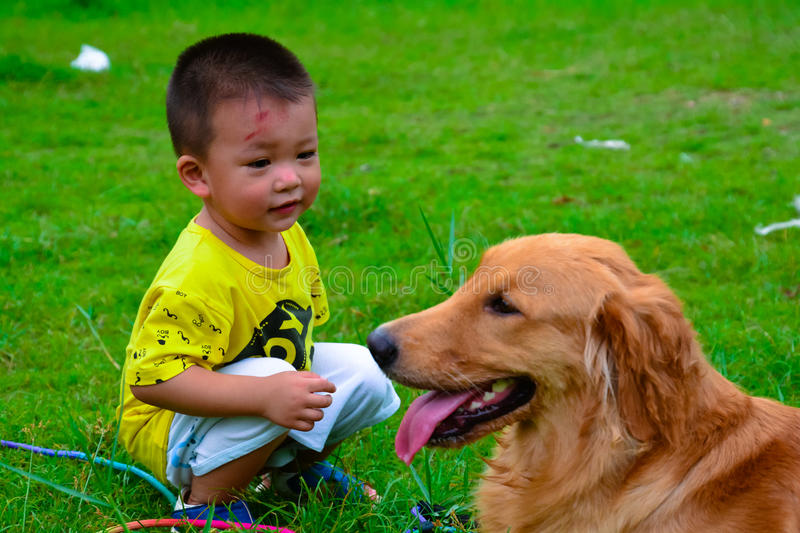 Children and Golden retriever dog royalty free stock photography
