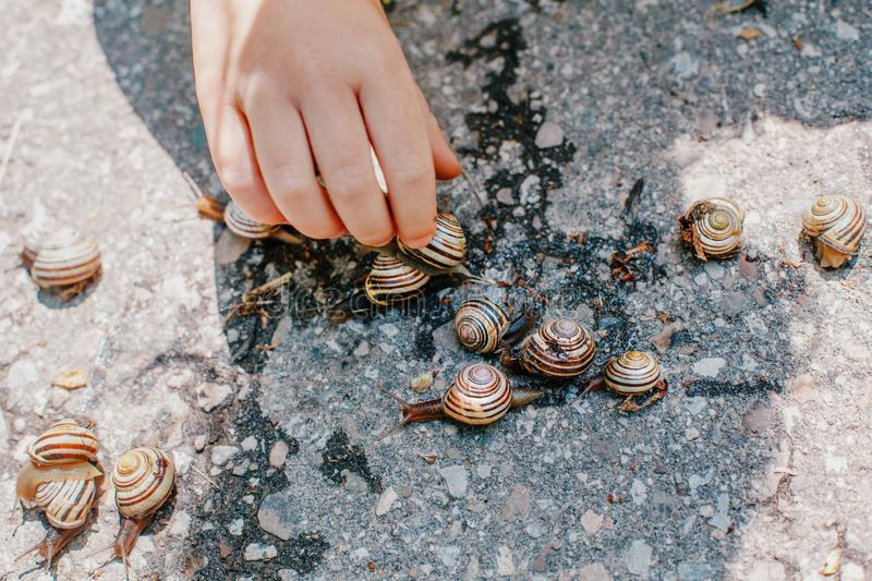 Children hand touching garden snails. Children hand touching garden. Closeup macro of child hands palms picking holding many little small forest garden yellow royalty free stock photos