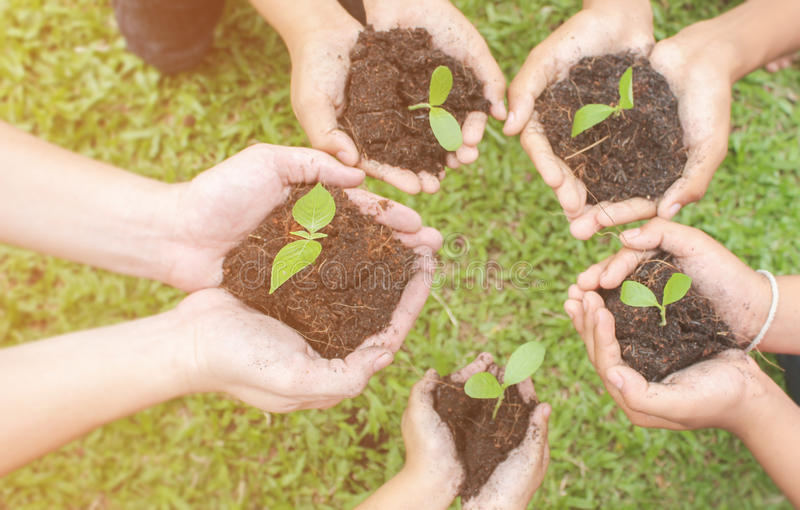 Children hands holding sapling in soil surface with plant. Spring or summer time, Multicultural hands of children and adult with plant, Green environment and royalty free stock photo