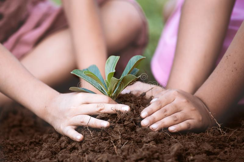 Children hands planting young tree on black soil together. As save world concept stock images