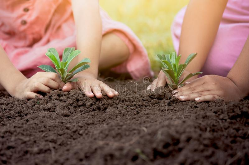 Children hands planting young tree on black soil together. As save world concept stock photography