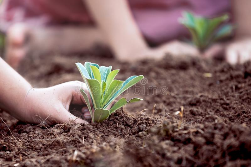 Children hands planting young tree on black soil together. As save world concept royalty free stock image