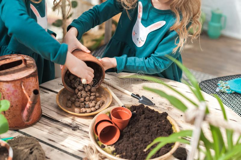 Children help to transplant plants into the ground, in pots. Gardening in the winter garden royalty free stock image