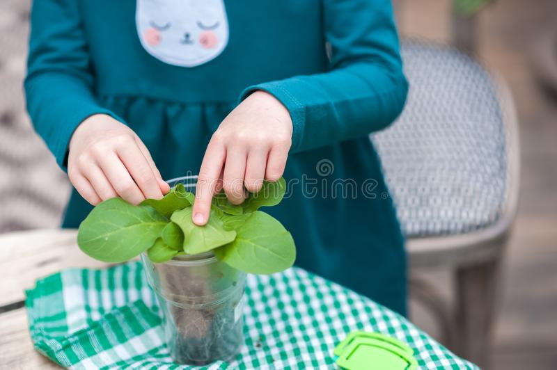 Children help to transplant plants into the ground, in pots. Gardening in the winter garden royalty free stock photos