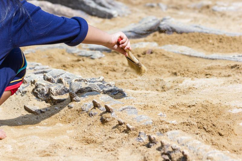 Children learning about, Excavating dinosaur fossils simulation stock photography