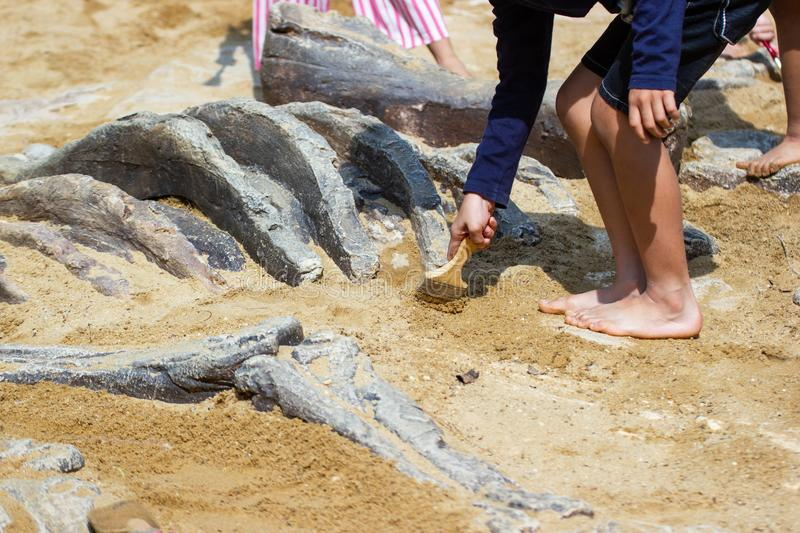 Children learning about, Excavating dinosaur fossils simulation royalty free stock photo