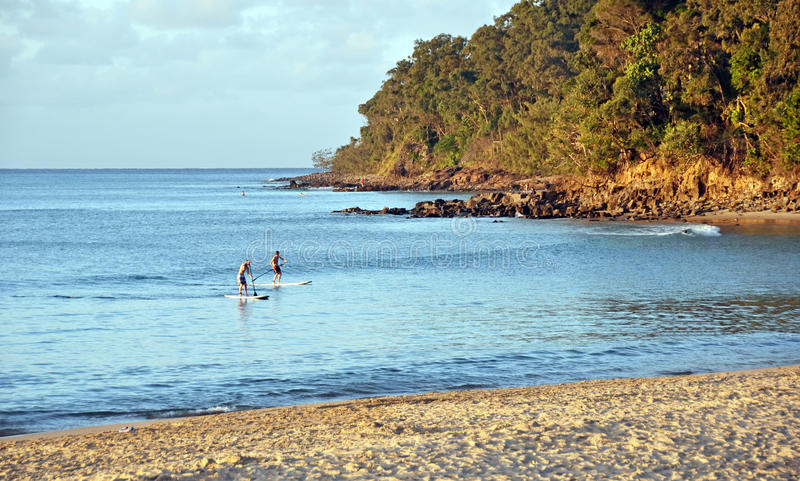 Children on Paddle Boards at Noosa Heads Beach at Sunset, Queens royalty free stock image