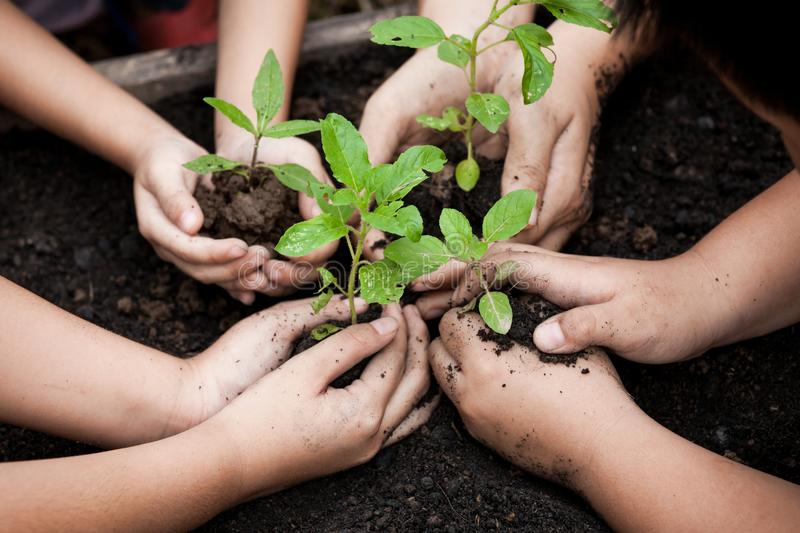 Children and parent hands planting young tree on black soil. Together as save world concept stock photography