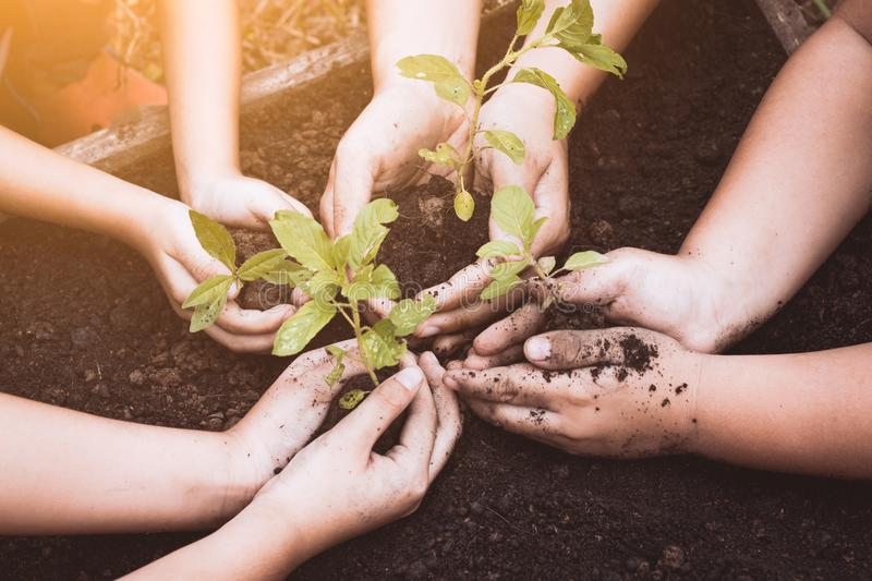 Children and parent hands planting young tree on black soil. Together as save world concept in vintage color tone royalty free stock photography