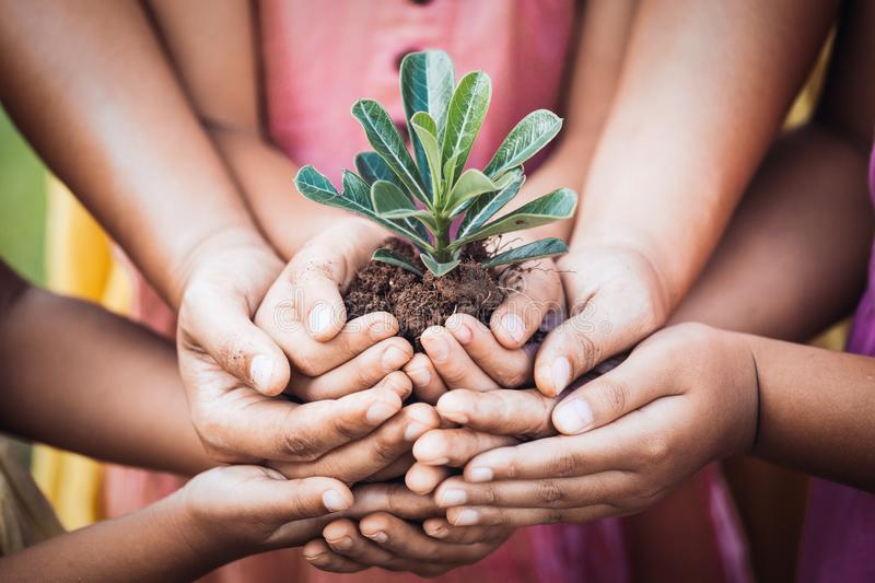 Children and parent holding young tree in hands for planting. Together with love and unity as save world concept royalty free stock photography