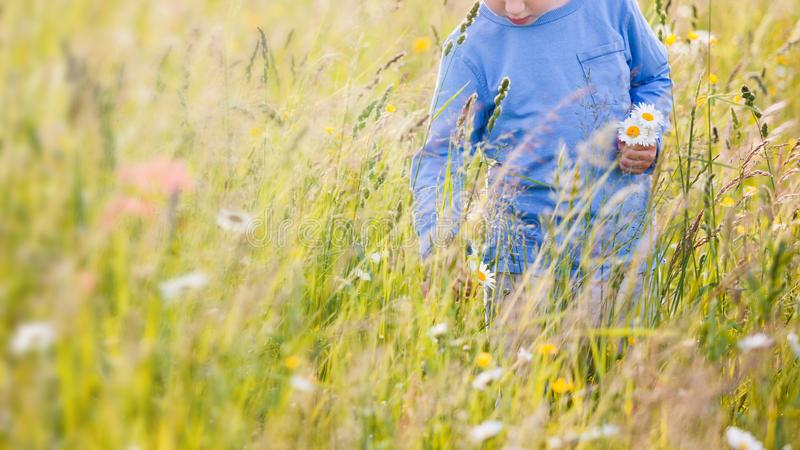 Children picking flowers on a meadow royalty free stock photo