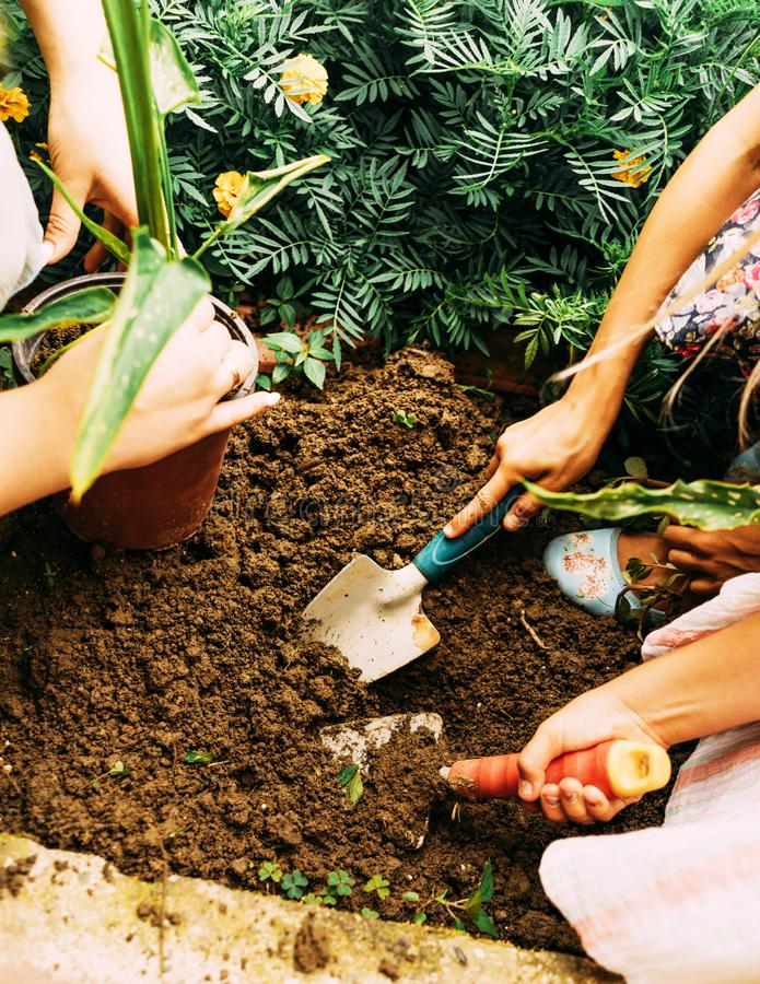 Children plant in the garden royalty free stock image