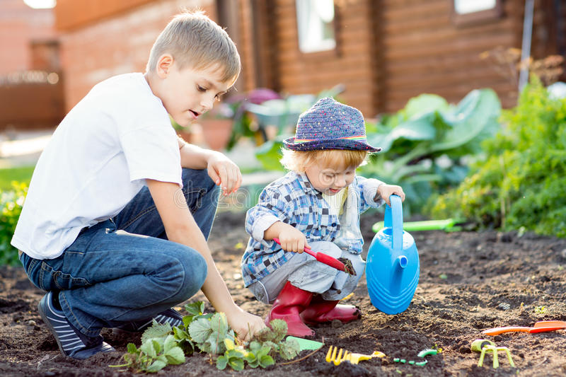Children planting strawberry seedling into fertile soil outside in garden royalty free stock photos