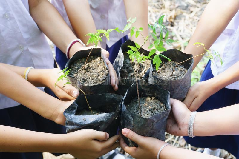 Children are planting trees together stock photo