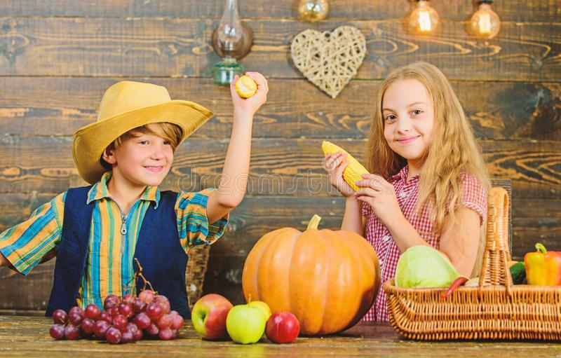 Children play corncobs vegetables wooden background. Kids girl boy celebrate harvest festival rustic style. School. Festival holiday. Elementary school fall stock photos
