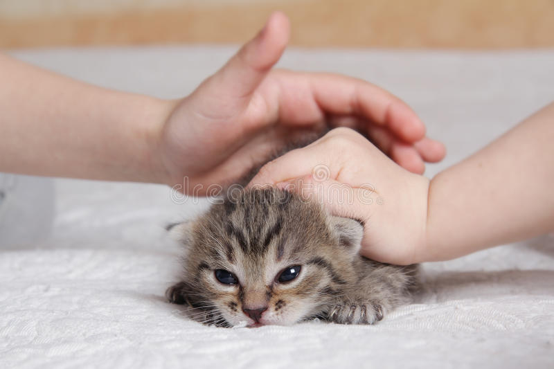 Children playing with kitten royalty free stock photos