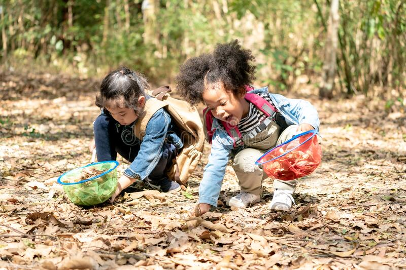 Little kids Explorer Hiking in Forest. Children Playing Outdoors. Preschool Kids playing with Autumn Leaves. Little Girl playing with Net in Jungle. Little kids stock photos