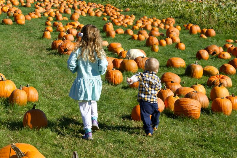 Children Running Through A Pumpkin Patch Stock Photo