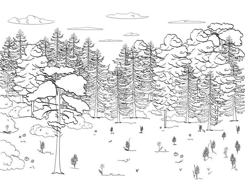 Children s coloring, black lines, white background, forest, glade, lots of trees, set. A lot of green, nature. Vector stock illustration