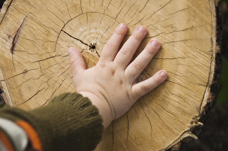 Download Children's Hand On Stub Royalty Free Stock Photos - Image: 15141548