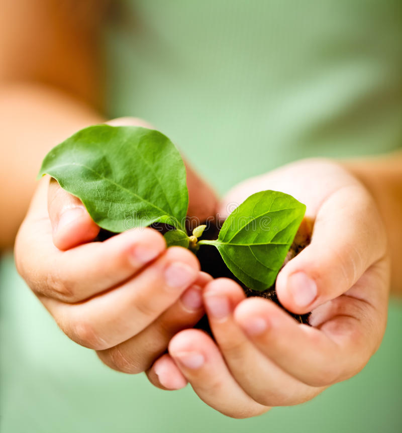 Download Child holding little plant stock photo. Image of baby - 29730526