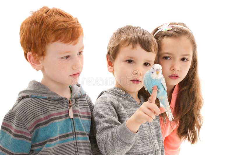 Download Children With Tame Pet Budgerigar Stock Image - Image: 31464337