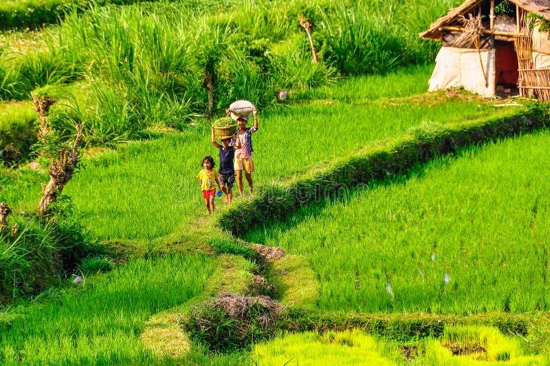 Children walking on rice field near Tirtagangga in Bali, Indonesia royalty free stock photography