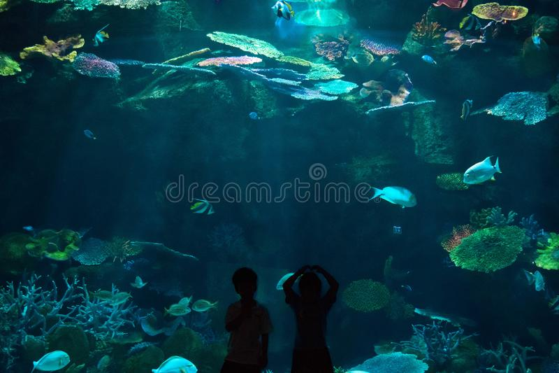 Children was happy and fun to see the world underwater in aquarium stock photo