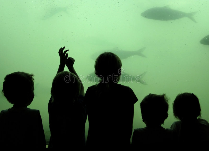 Children watch fish. Children watching Shad in the fish ladder on the Columbia River in Oregon at one of the hydro-power dams. Some noise due to low-light royalty free stock images