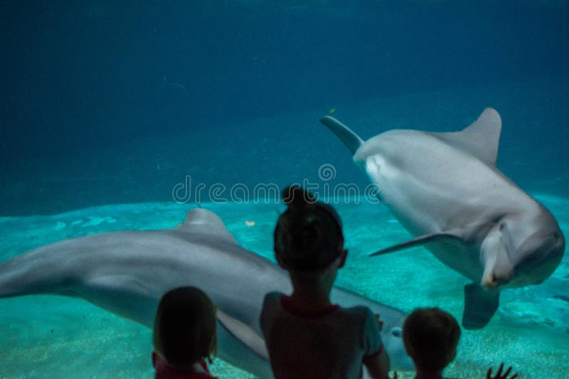 Children watching cute dolphins at Seaworld . royalty free stock images