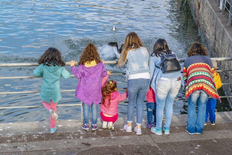 Children Watching Fishes at Punta del Este Port, Uruguay stock image