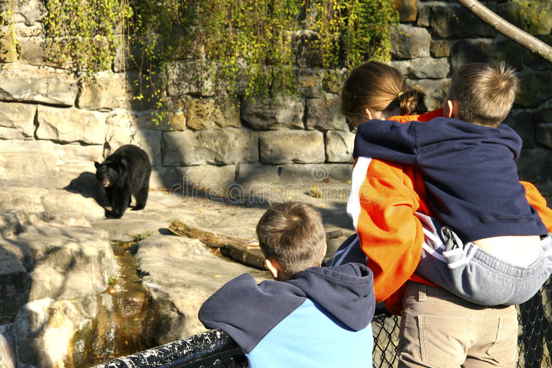 Children at the Zoo. Looking at Bear royalty free stock images