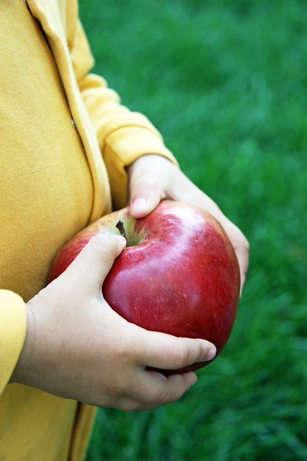 Childs-Hände mit großem kürzlich geerntetem Apfel lizenzfreies stockfoto