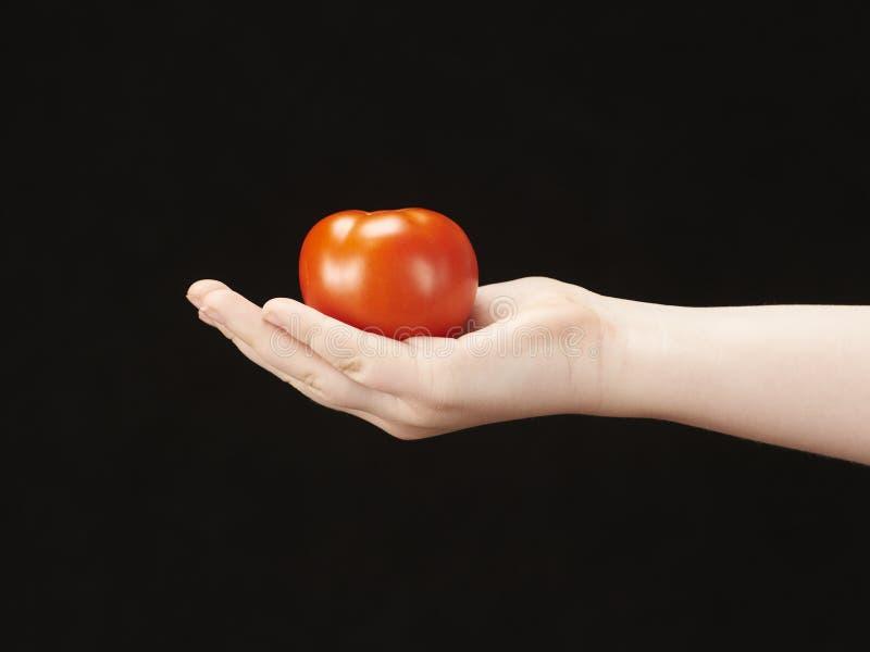 Childs Hand mit tomatoe und Palmeneinfassung oben lizenzfreie stockfotografie