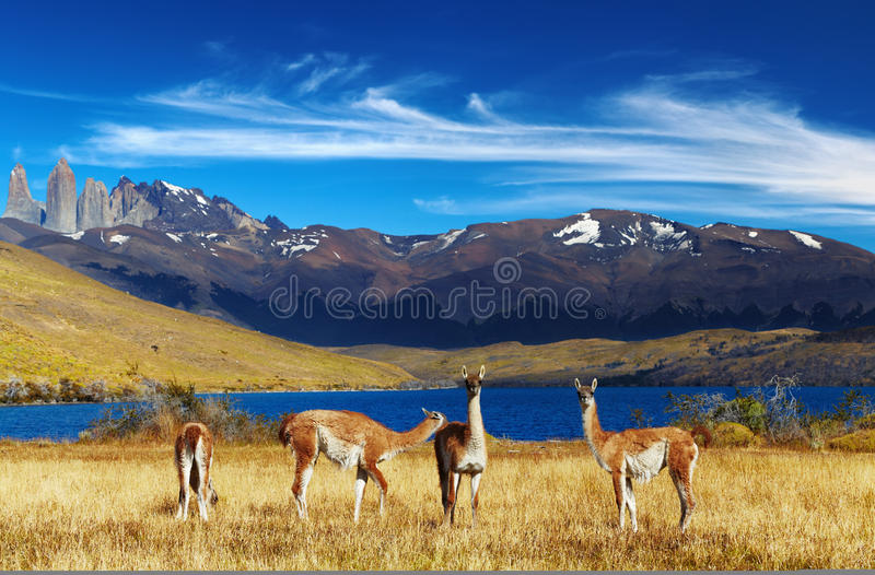 chile Del Paine patagonia torres fotografia royalty free