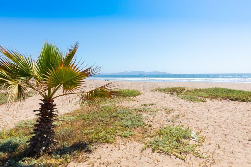 Chile La Serena petit palmier sur la plage image stock