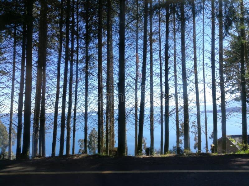 Chile lake district lago ranco roadside trees forest jungle. Autumn stock images