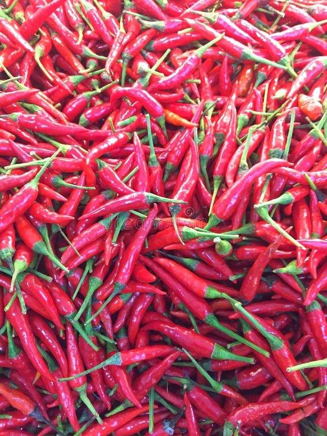 Chile rojo fotografía de archivo