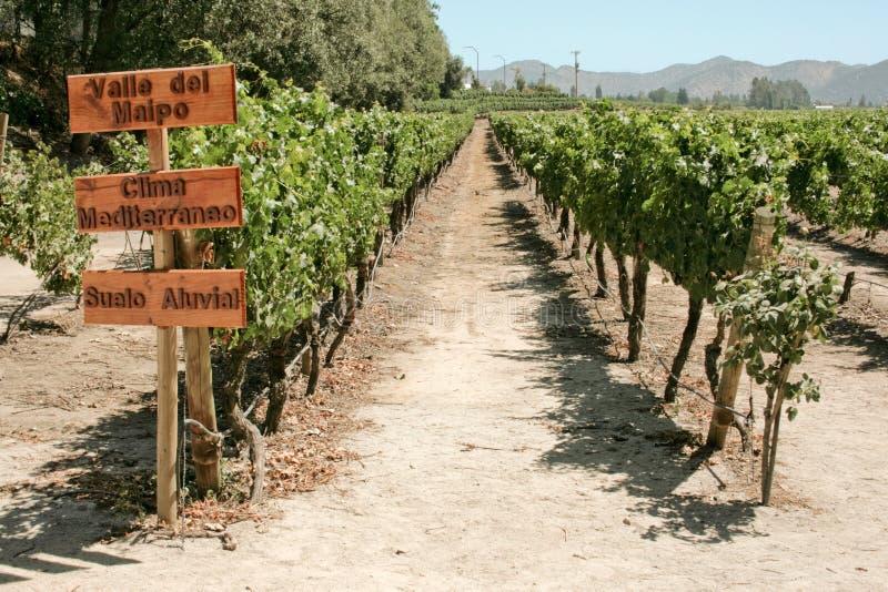 chile vingård royaltyfria foton
