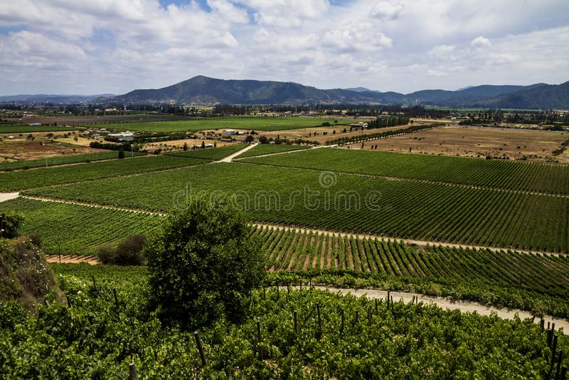 Chileens wijngaardpanorama royalty-vrije stock foto