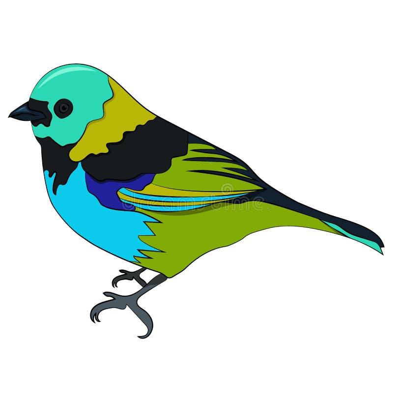 Chilensis di tangara dell'uccello royalty illustrazione gratis